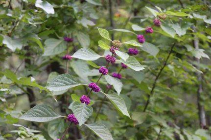 IMG_3676 berry