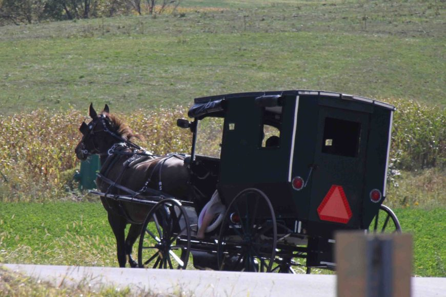 horse buggy in amish country ohio