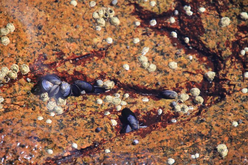 tide pool on ocean path trail at acadia national park on Mount Desert Island