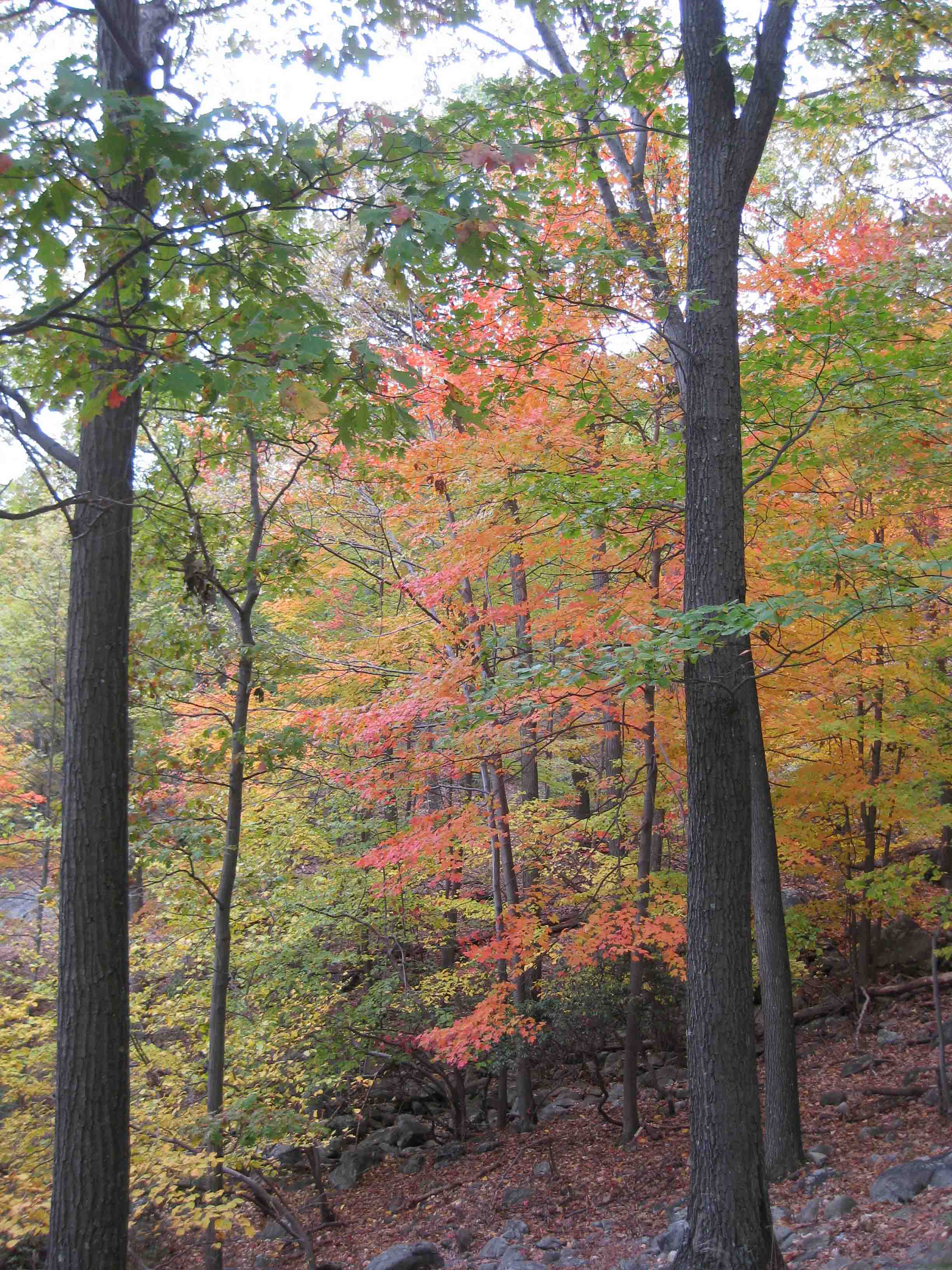 fall foliage at bear mountain state park in the hudson river valley