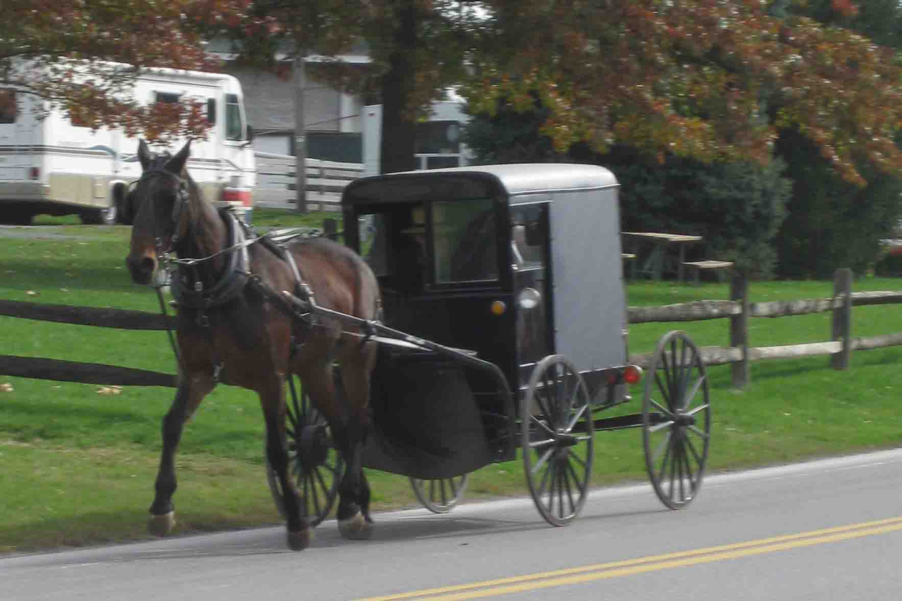 horse and buggy in intercourse, pennsylvania
