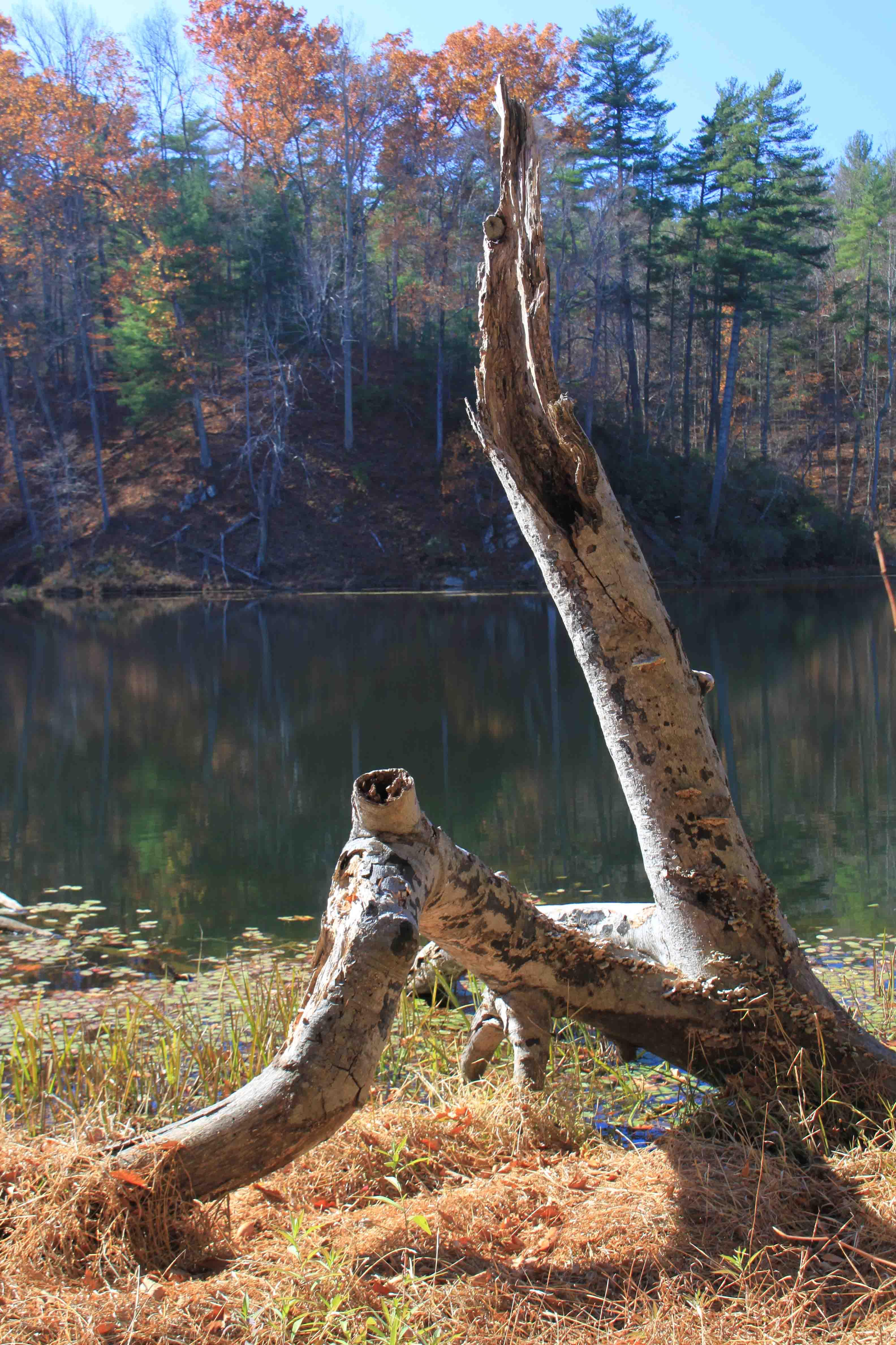 otter lake, blue ridge parkway