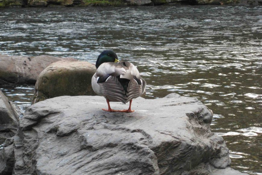 duck at nantahala outdoor center