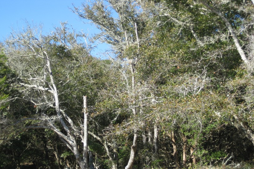 Buxton woods in the outer banks
