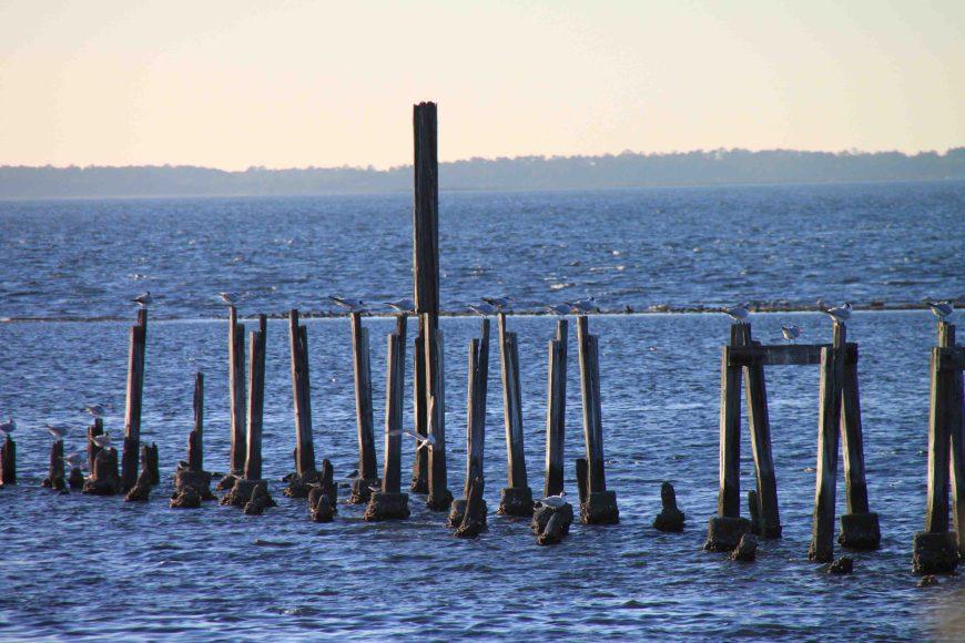 old pier at st. marks national wildlife refuge