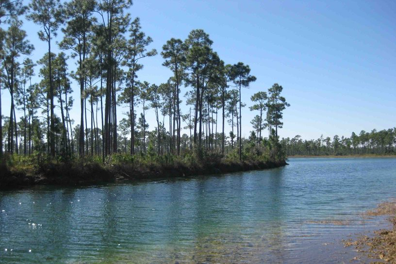 long pine key in the florida everglades national park