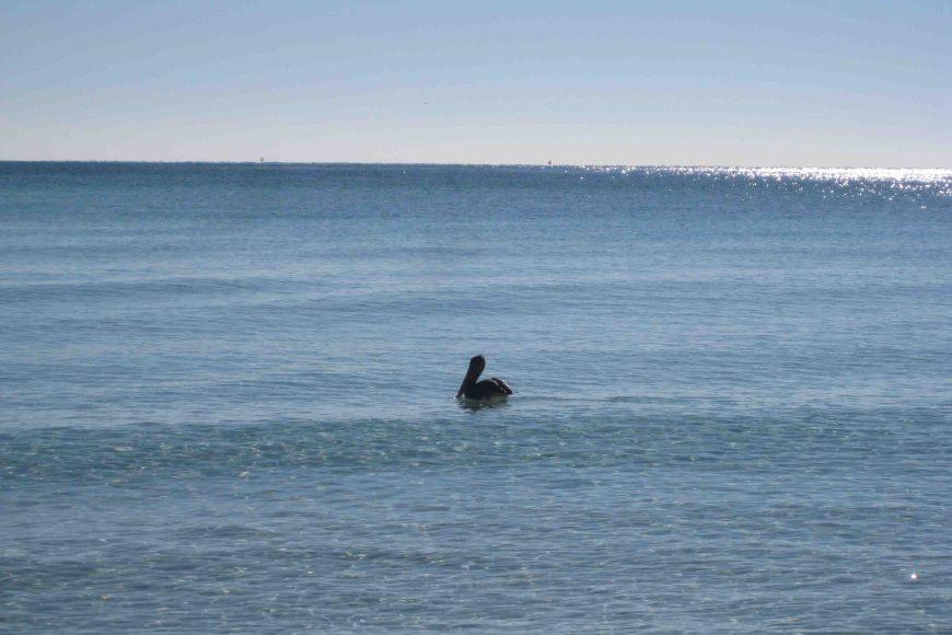 pelican in destin