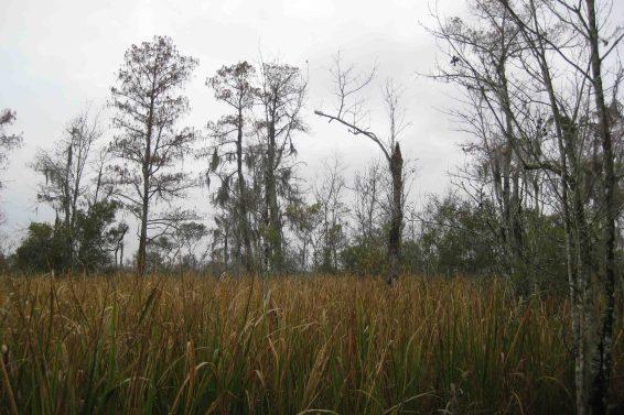 Jean Lafitte National Historical Park and Preserve, Barataria Region