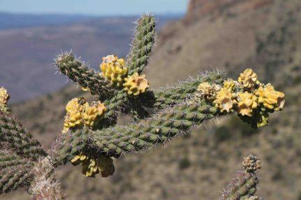 IMG_6426 cactus coronado trail
