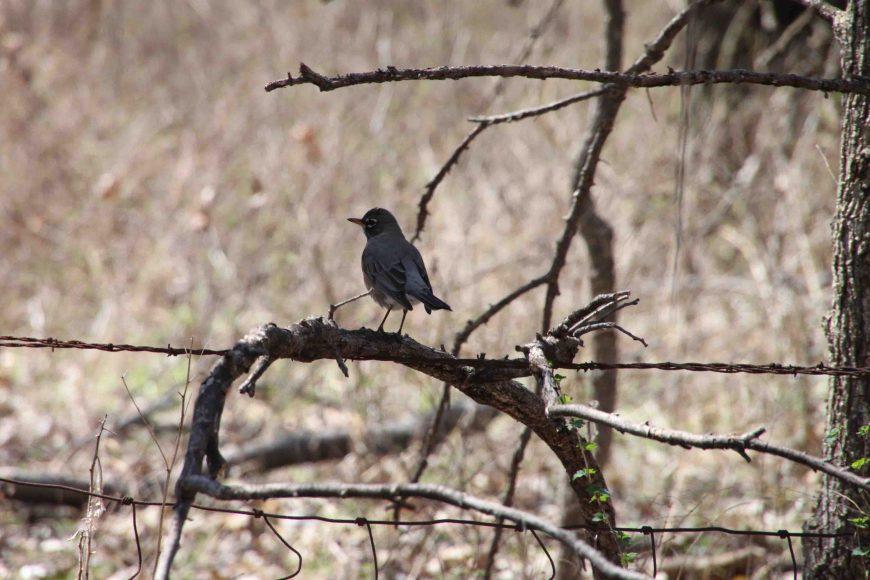 bird in el dorado state park in Kansas