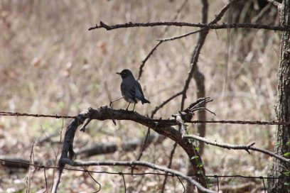 IMG_6549 bird el dorado state park