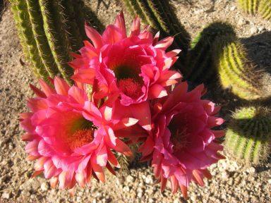 IMG_0740 cacti
