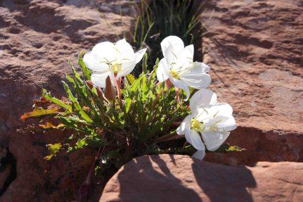 IMG_2365 flower
