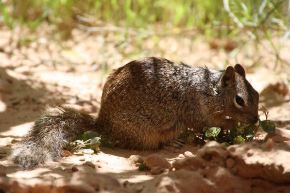 IMG_2733 squirrel