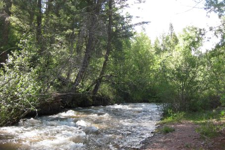 IMG_2845 colorado trail