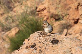 IMG_7702 squirrel
