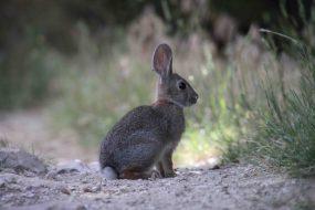 IMG_7721 rabbit