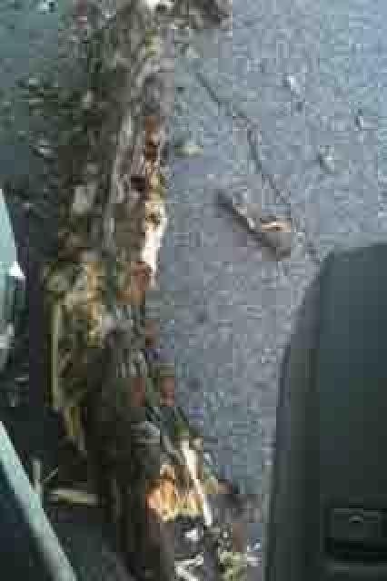 tree limb on VANilla