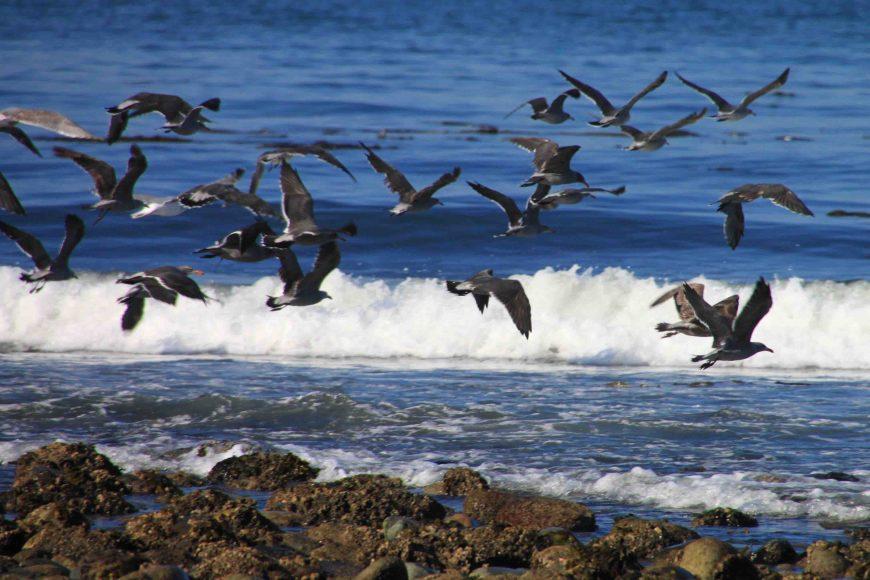 birds at partridge point beach