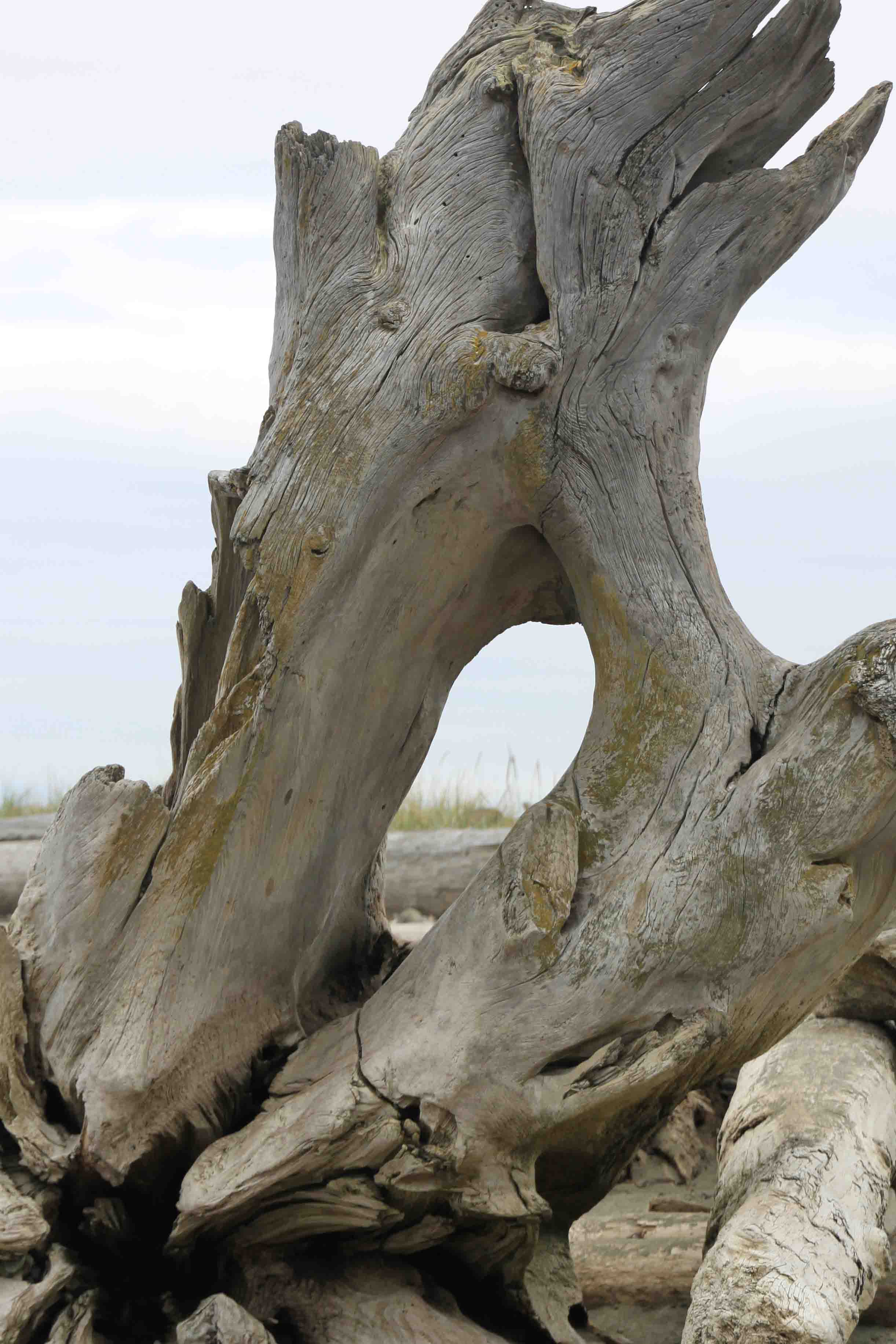 driftwood at dungeness wildlife refuge