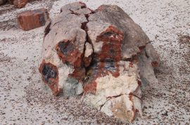 IMG_0003 petrified forest