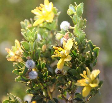 IMG_2932 flower