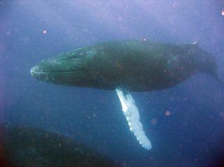 IMG_3075 whale