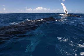 IMG_3309 spy hop 2 whales