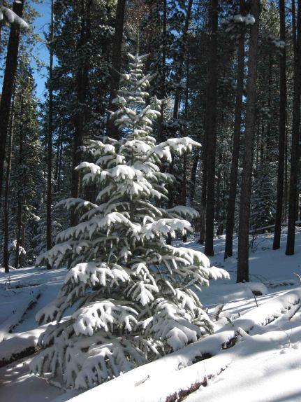 IMG_3288 xmas tree
