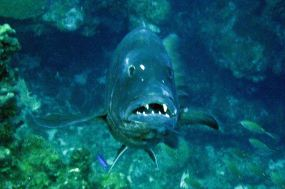 IMG_4010 grouper