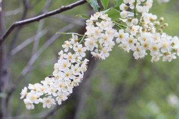 IMG_4149 flowers