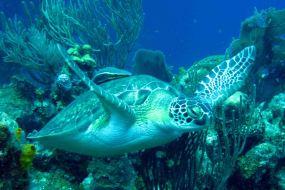 IMG_4168 turtle