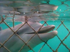 IMG_4264 dolphin