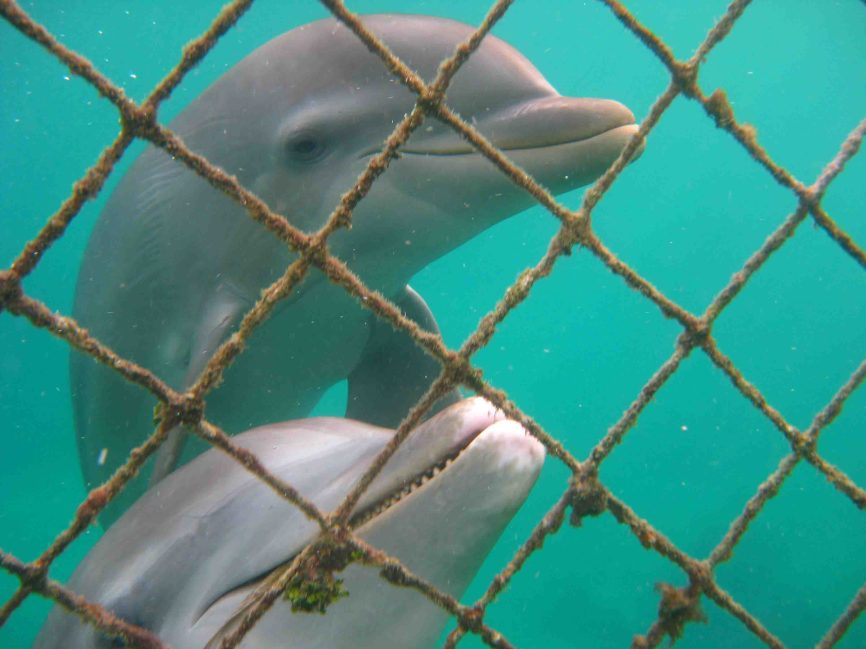 IMG_4265 dolphins
