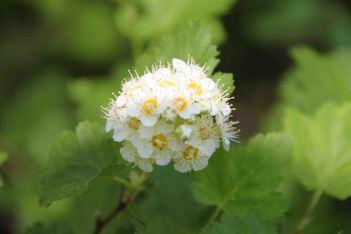 IMG_4172 flower