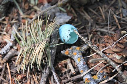 IMG_4174 birds egg