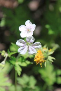 IMG_4216 flowers