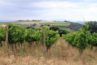 IMG_4297 winery