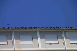 IMG_4423 birds