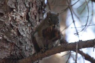 IMG_5463 squirrel