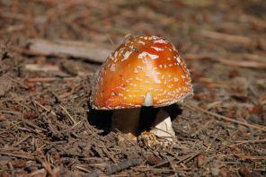 mushroom on the colorado trail