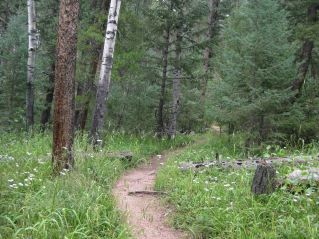 IMG_5693 trail toward end