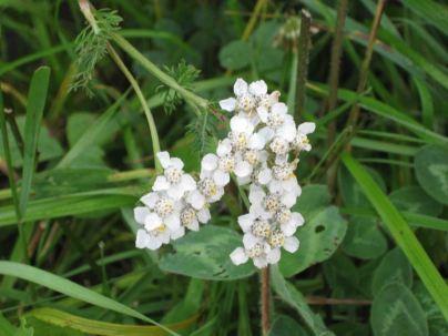 IMG_5712 flower
