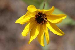 IMG_5800 flower