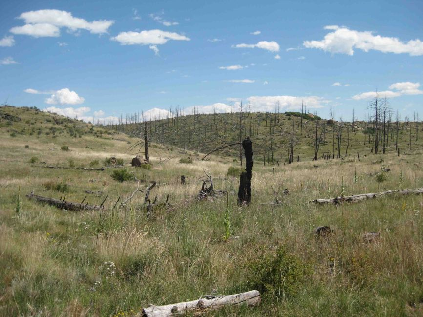 burn area on the colorado trail