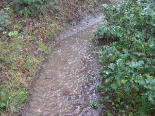 rainwater running through the Colorado Trail