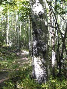 fall hikes near denver