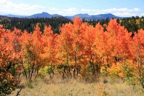 Aspen on the Colorado Trail Segment 5