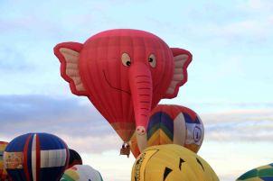 IMG_6736 elephant