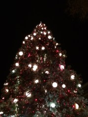tree at the broadmoor